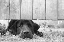 Hund unter einem Zaun
