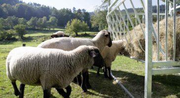 Stalleinrichtung - Weideraufe für Schafe