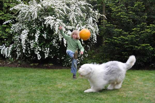 Gartenzaun-bietet-Sicherheit