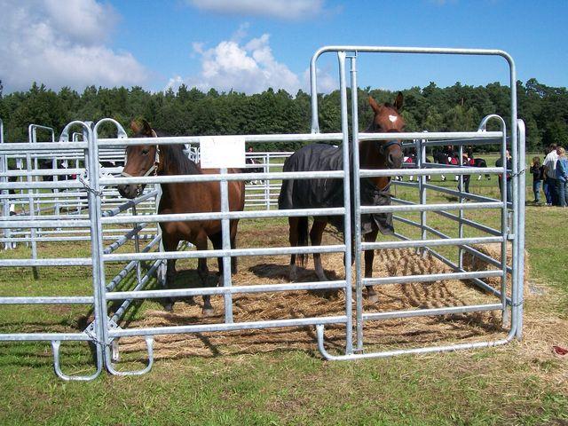 Roundpen für die Eingrenzung einer Weide-, Hüte- und Longierfläche für Pferde und Ponys